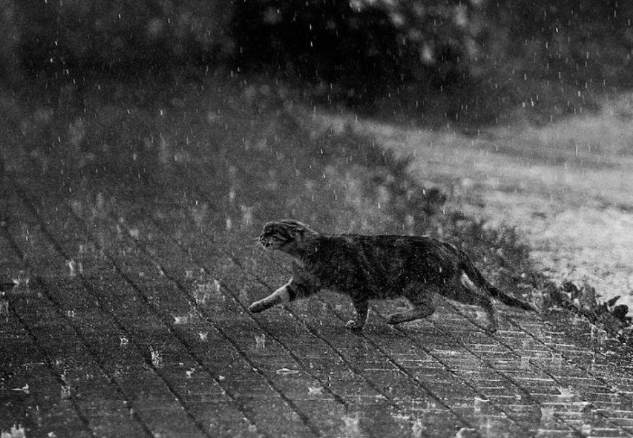 cat in the rain